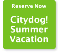 Spring Break at Citydog! Club. Where dogs party! Reserve Now.