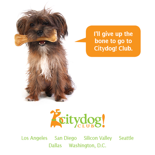 Citydog! Club – Dog Daycare, Dog Boarding, Dog Grooming and Fun!